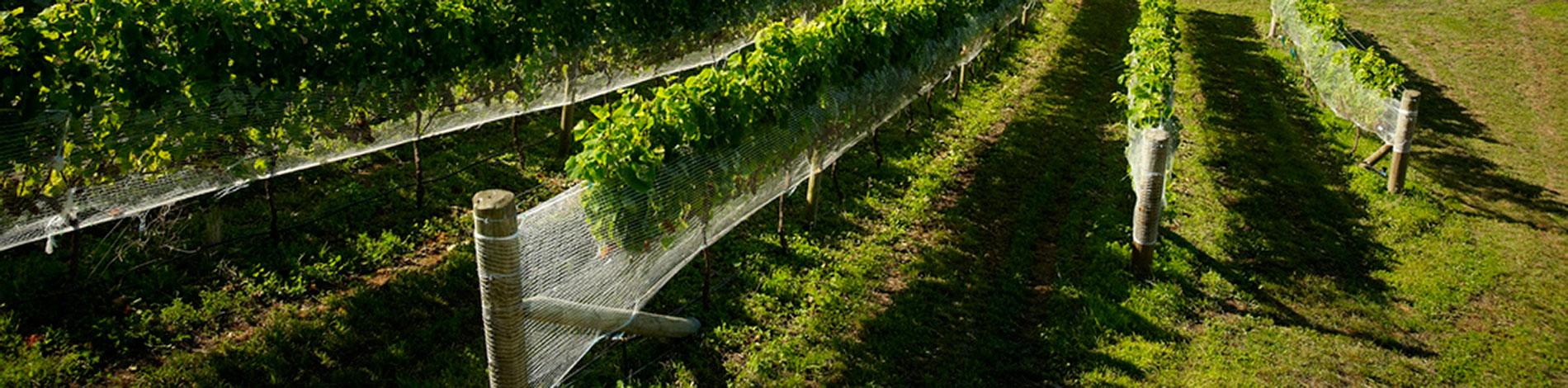 ΔΙΧΤΥΑ ΚΡΗΤΗΣ ΑΕΒΕ - Παραγωγή πλαστικών διχτύων